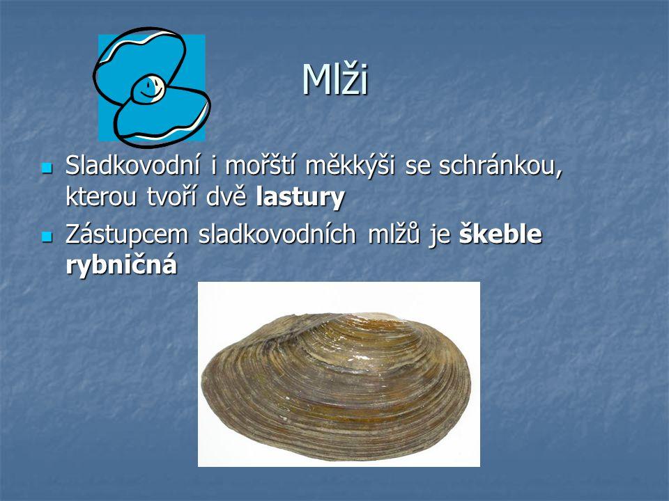 Mlži Sladkovodní i mořští měkkýši se schránkou, kterou tvoří dvě lastury.