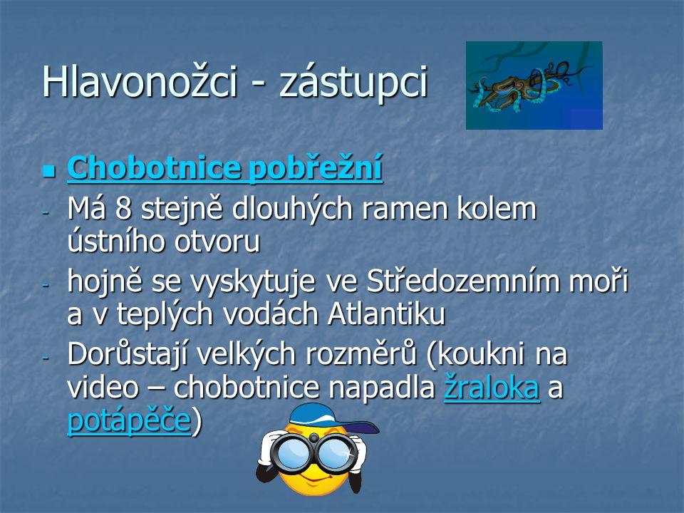 Hlavonožci - zástupci Chobotnice pobřežní