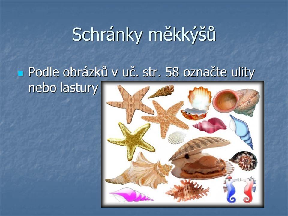 Schránky měkkýšů Podle obrázků v uč. str. 58 označte ulity nebo lastury