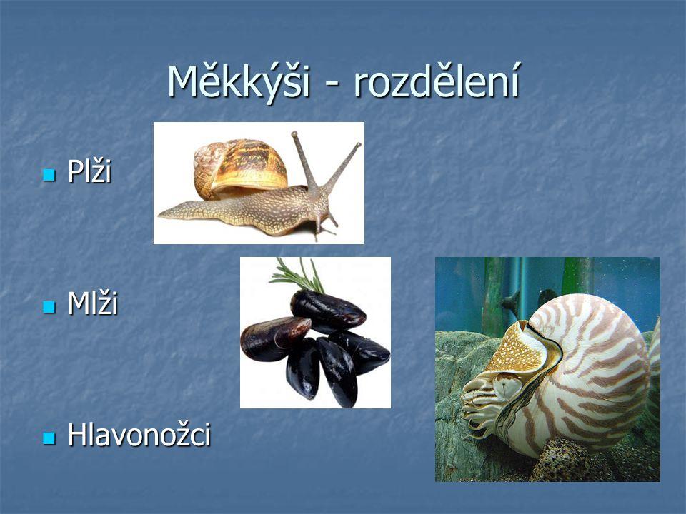 Měkkýši - rozdělení Plži Mlži Hlavonožci