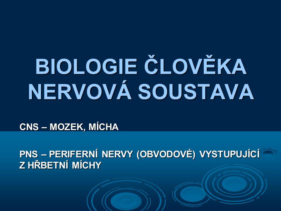 BIOLOGIE ČLOVĚKA NERVOVÁ SOUSTAVA