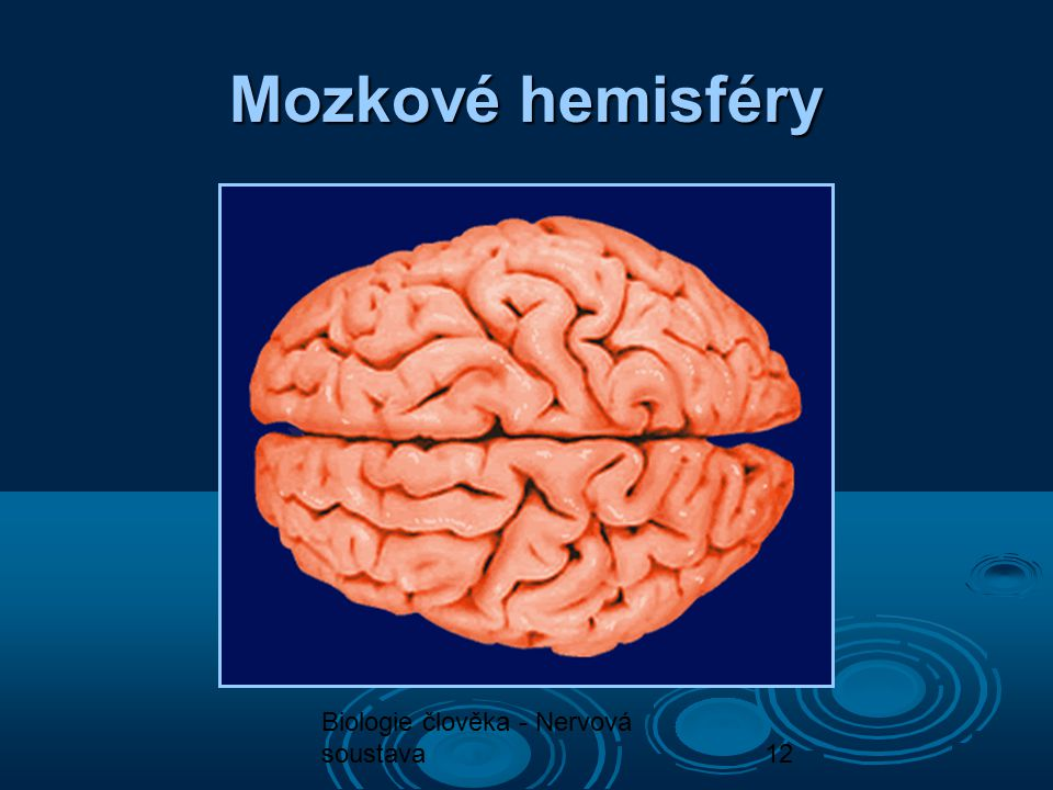 Mozkové hemisféry Biologie člověka - Nervová soustava