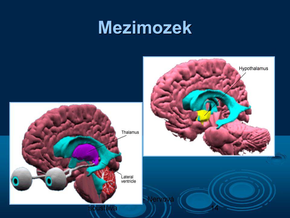 Mezimozek Biologie člověka - Nervová soustava