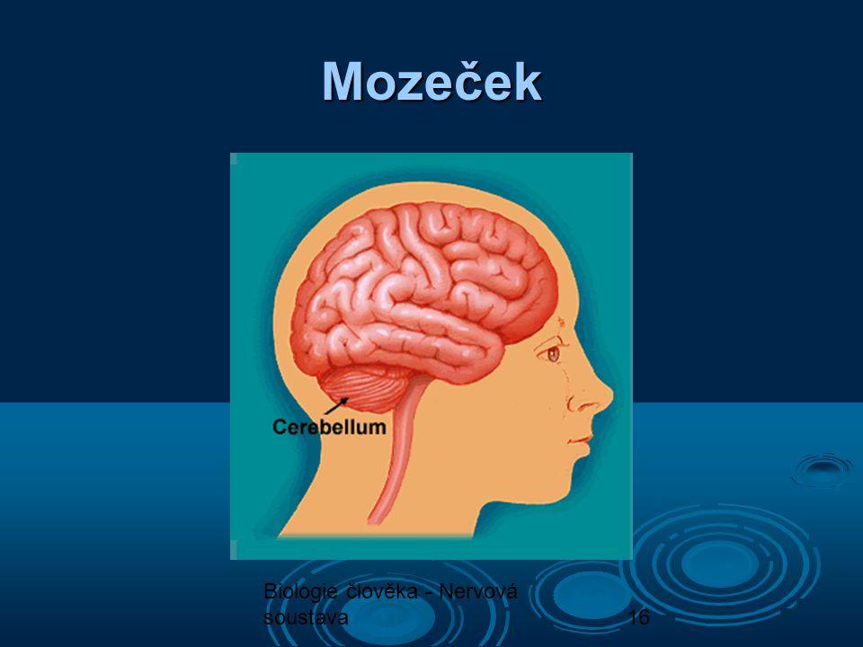 Mozeček Biologie člověka - Nervová soustava
