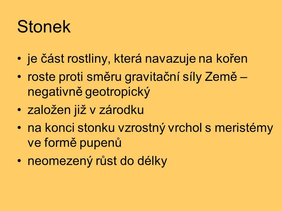 Stonek je část rostliny, která navazuje na kořen