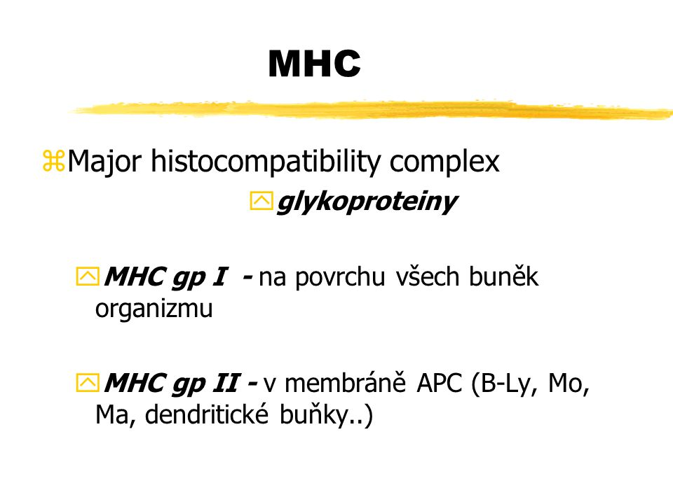 MHC Major histocompatibility complex glykoproteiny