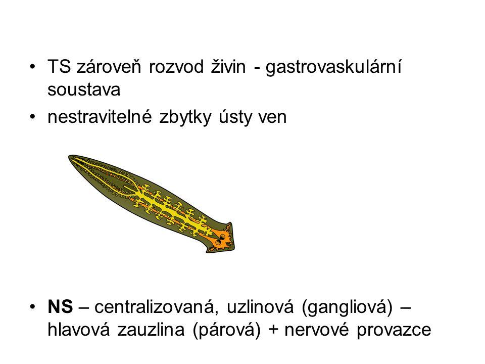 TS zároveň rozvod živin - gastrovaskulární soustava