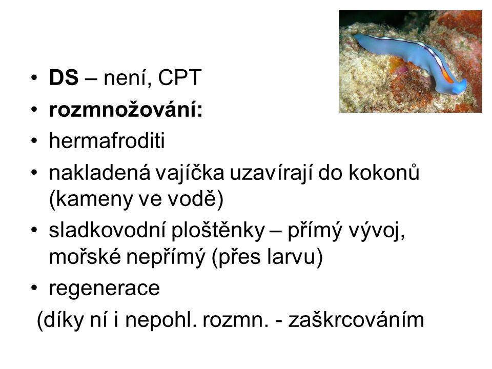 DS – není, CPT rozmnožování: hermafroditi. nakladená vajíčka uzavírají do kokonů (kameny ve vodě)