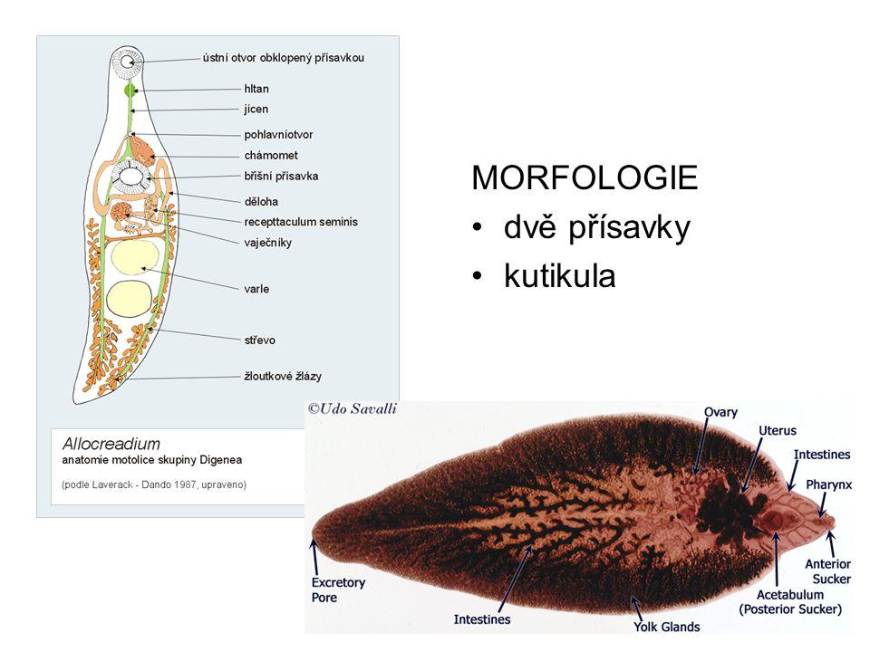 MORFOLOGIE dvě přísavky kutikula