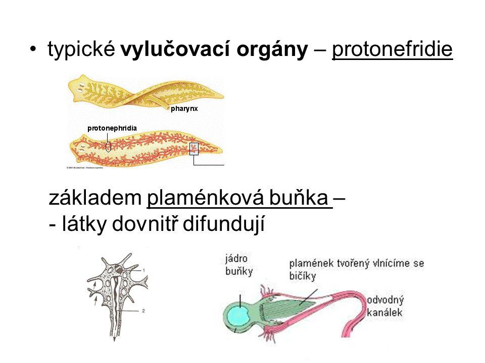 typické vylučovací orgány – protonefridie