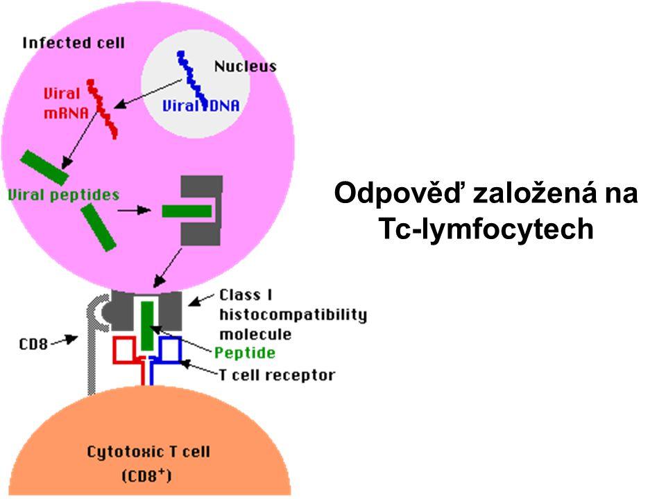 Odpověď založená na Tc-lymfocytech