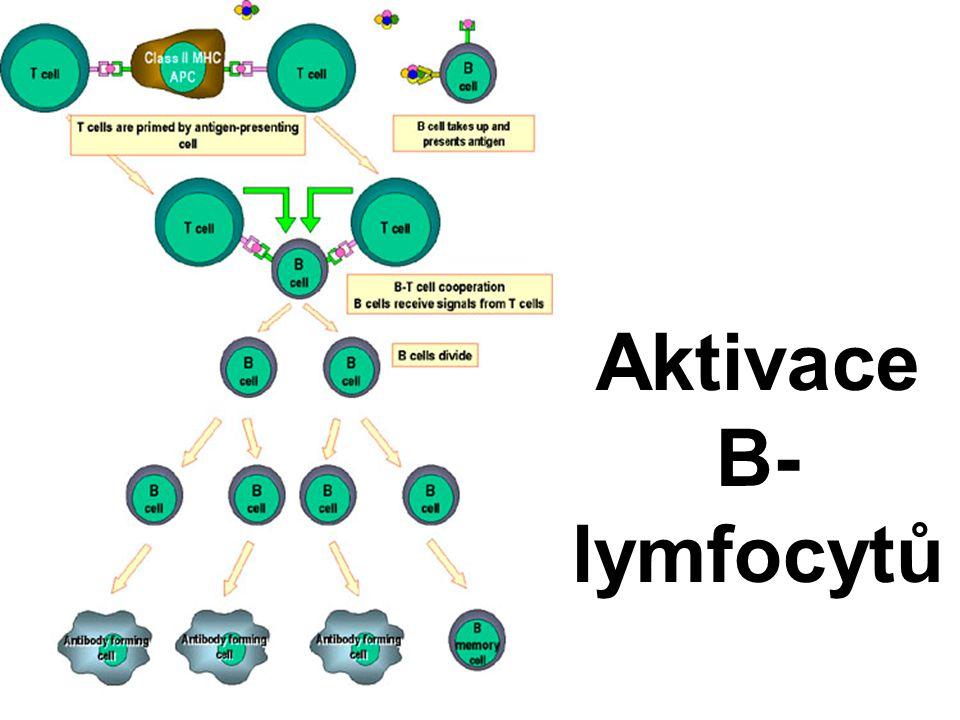 Aktivace B-lymfocytů