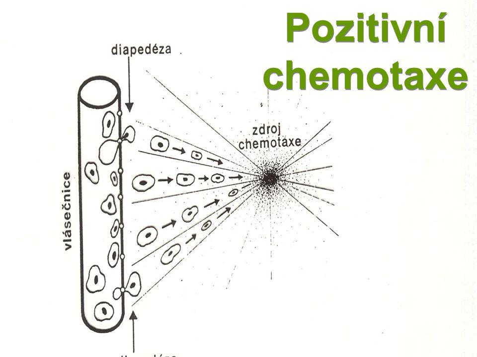 Pozitivní chemotaxe