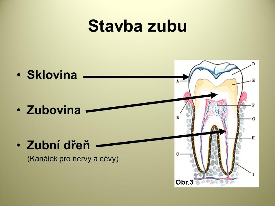 Stavba zubu Sklovina Zubovina Zubní dřeň (Kanálek pro nervy a cévy)
