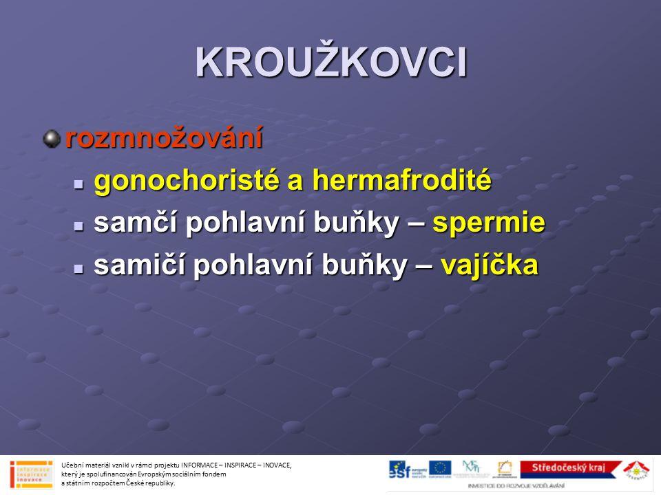 KROUŽKOVCI rozmnožování gonochoristé a hermafrodité