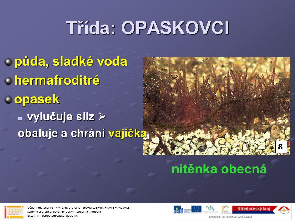 Třída: OPASKOVCI půda, sladké voda hermafroditré opasek nitěnka obecná
