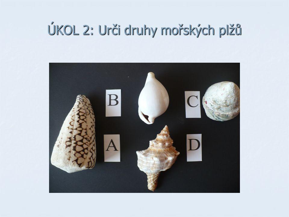 ÚKOL 2: Urči druhy mořských plžů