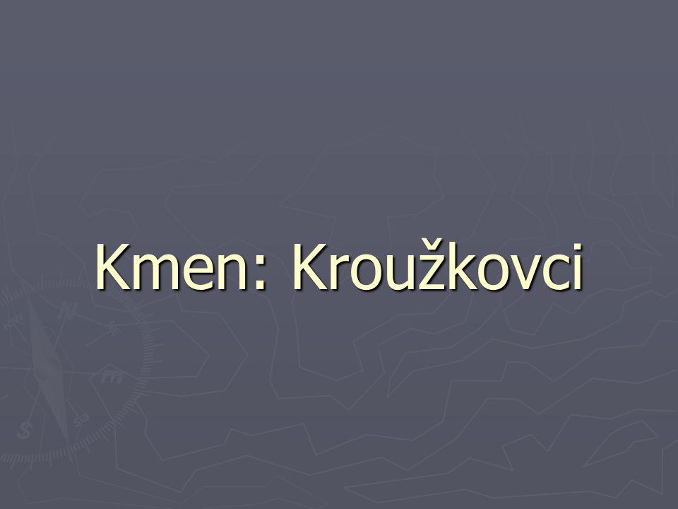 Kmen: Kroužkovci