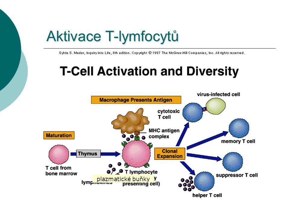 Aktivace T-lymfocytů plazmatické buňky