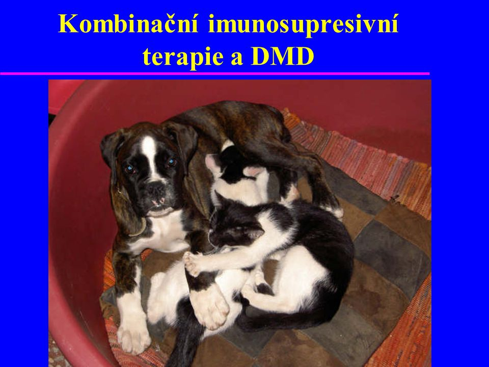 Kombinační imunosupresivní terapie a DMD
