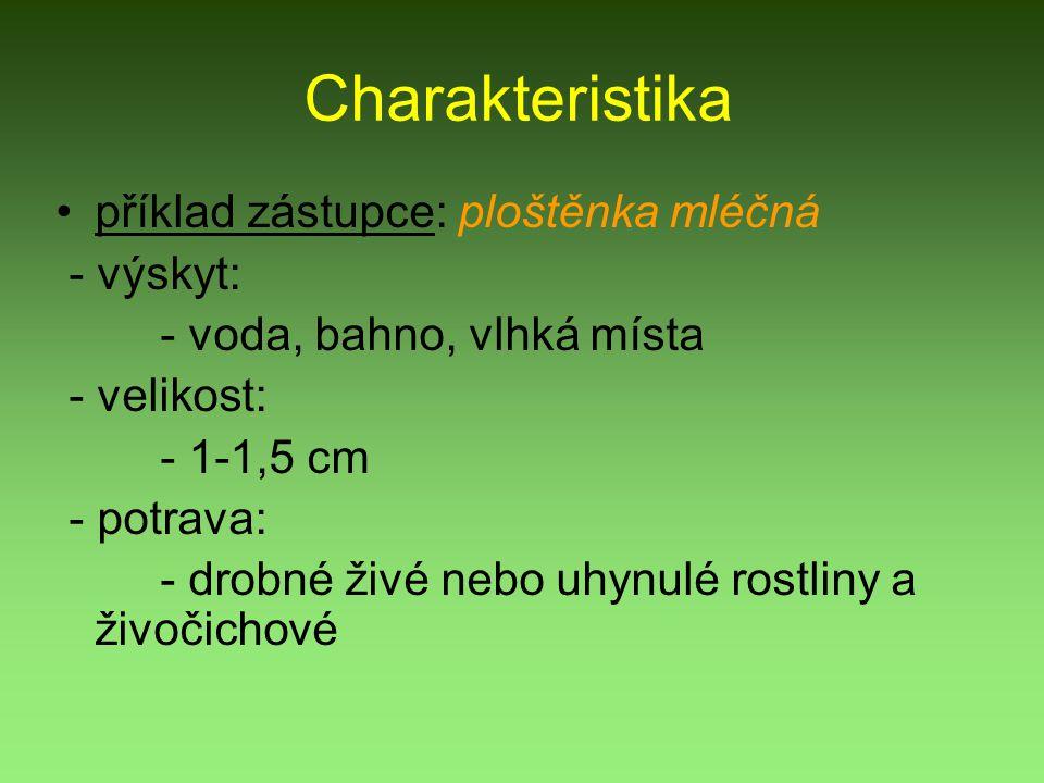 Charakteristika příklad zástupce: ploštěnka mléčná - výskyt: