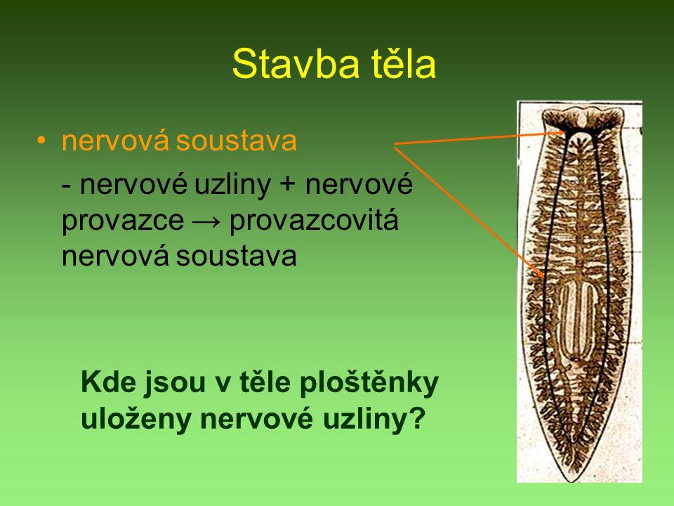 Stavba těla nervová soustava