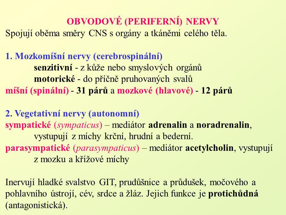 OBVODOVÉ (PERIFERNÍ) NERVY
