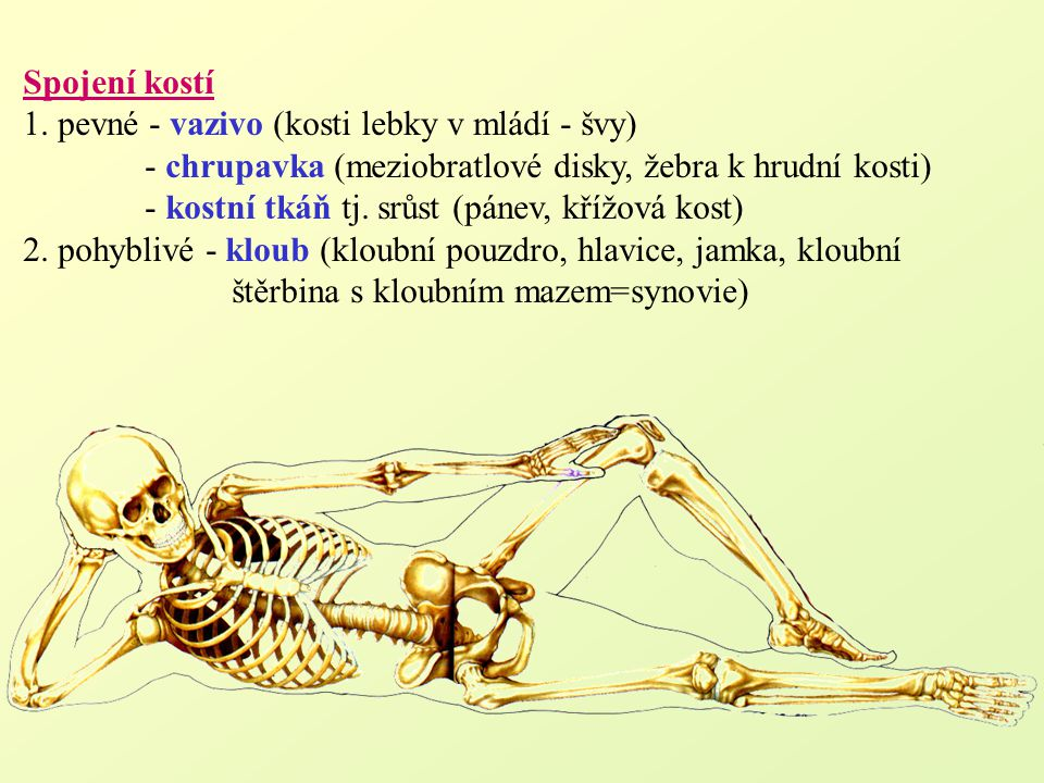 Spojení kostí 1. pevné - vazivo (kosti lebky v mládí - švy) - chrupavka (meziobratlové disky, žebra k hrudní kosti)