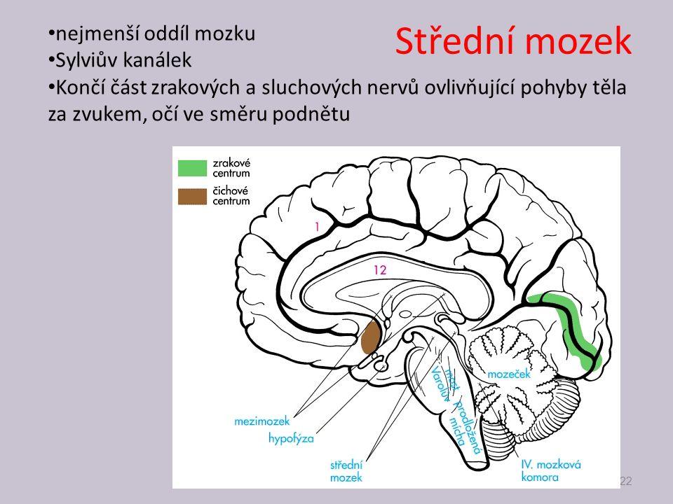Střední mozek nejmenší oddíl mozku Sylviův kanálek