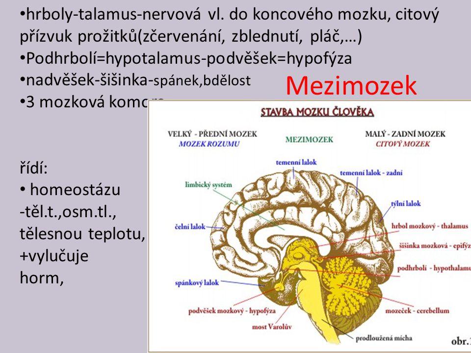 hrboly-talamus-nervová vl