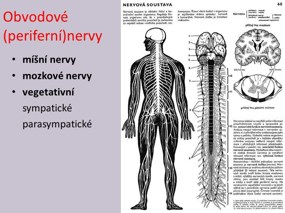 Obvodové (periferní)nervy