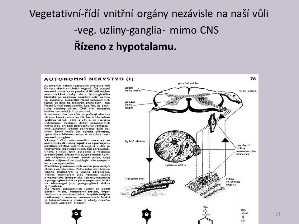 -veg. uzliny-ganglia- mimo CNS Řízeno z hypotalamu.