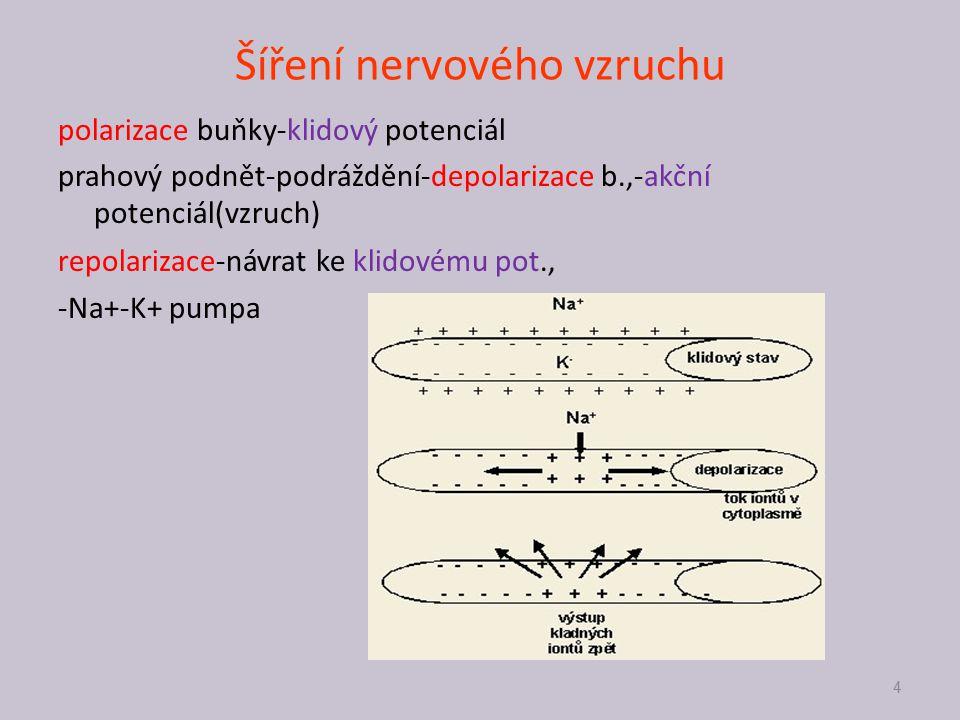 Šíření nervového vzruchu