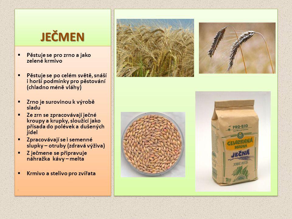 JEČMEN Pěstuje se pro zrno a jako zelené krmivo