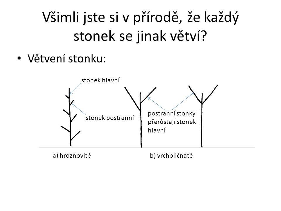 Všimli jste si v přírodě, že každý stonek se jinak větví