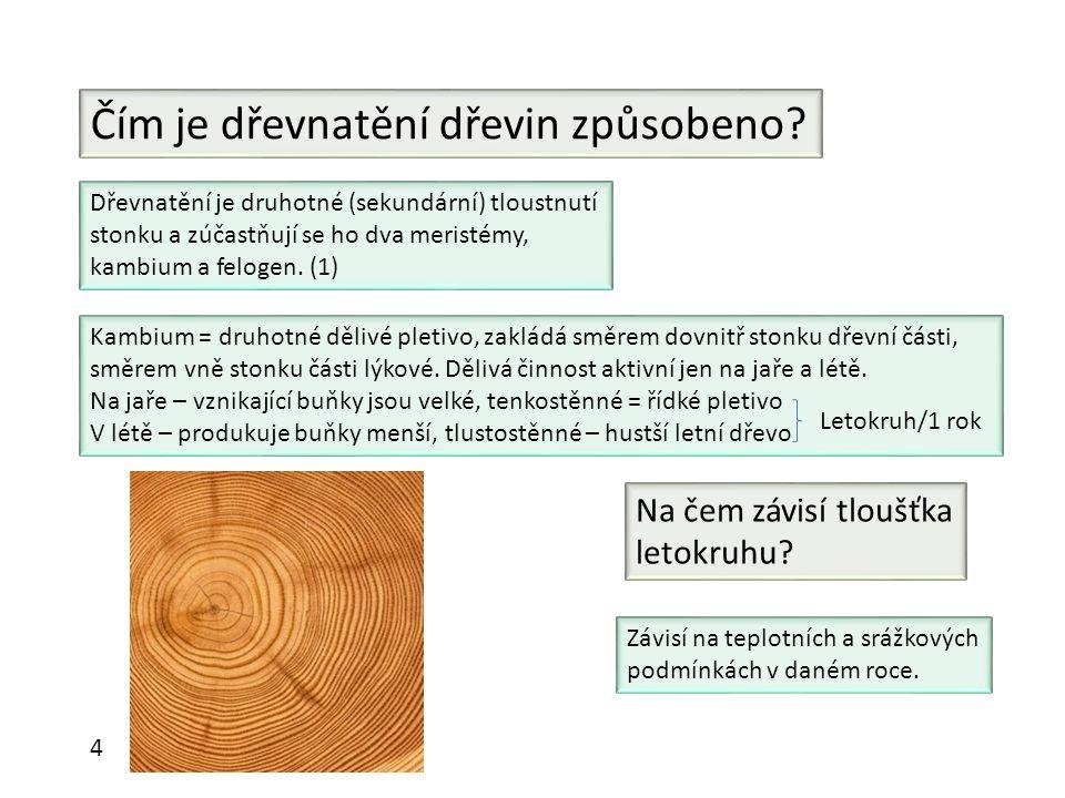 Čím je dřevnatění dřevin způsobeno