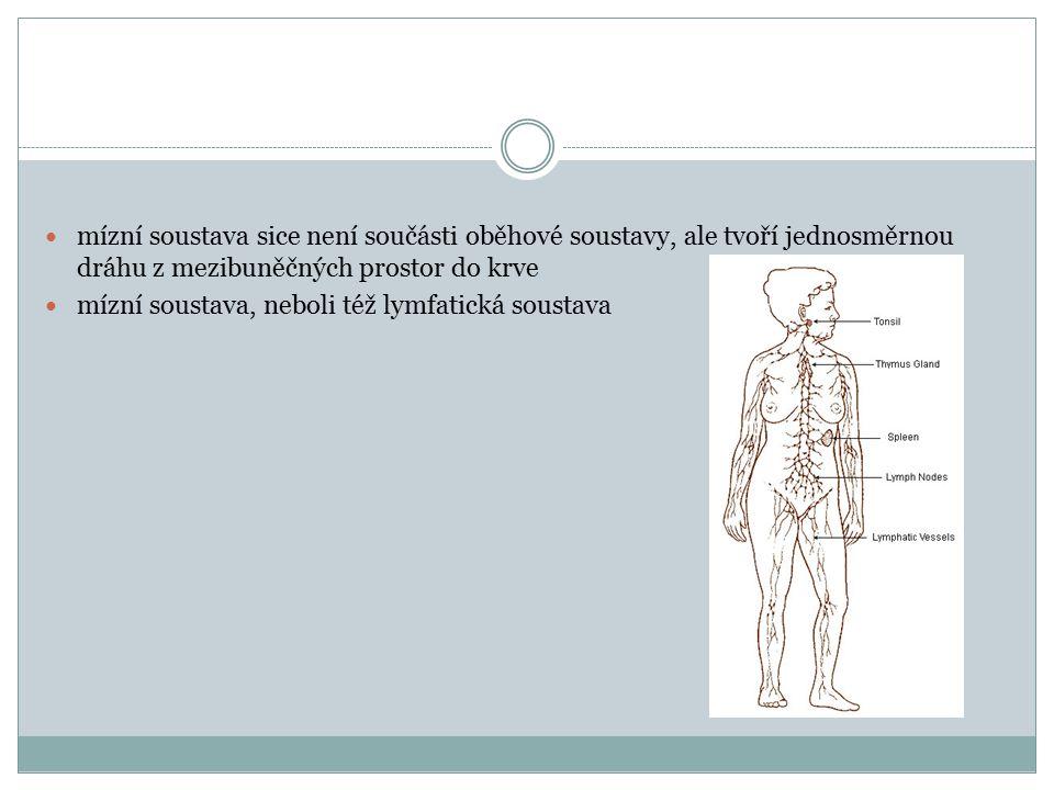 mízní soustava sice není součásti oběhové soustavy, ale tvoří jednosměrnou dráhu z mezibuněčných prostor do krve