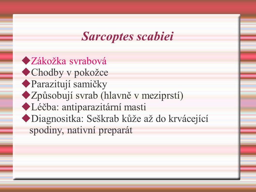 Sarcoptes scabiei Zákožka svrabová Chodby v pokožce Parazitují samičky