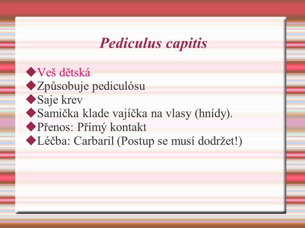 Pediculus capitis Veš dětská Způsobuje pediculósu Saje krev