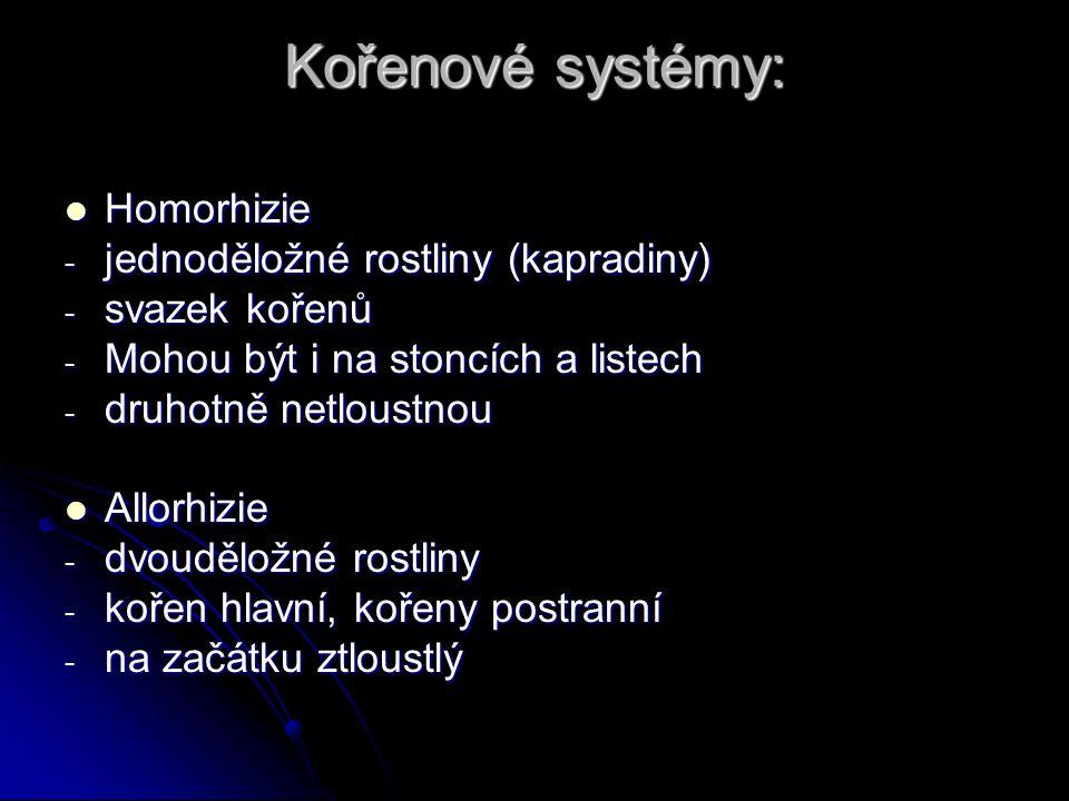 Kořenové systémy: Homorhizie jednoděložné rostliny (kapradiny)