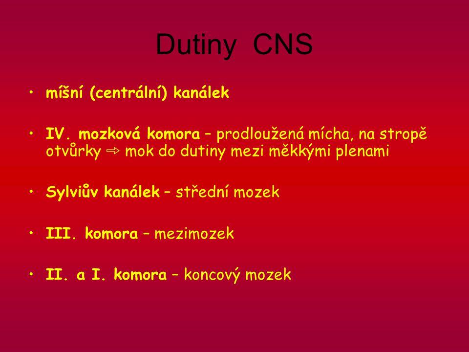 Dutiny CNS míšní (centrální) kanálek