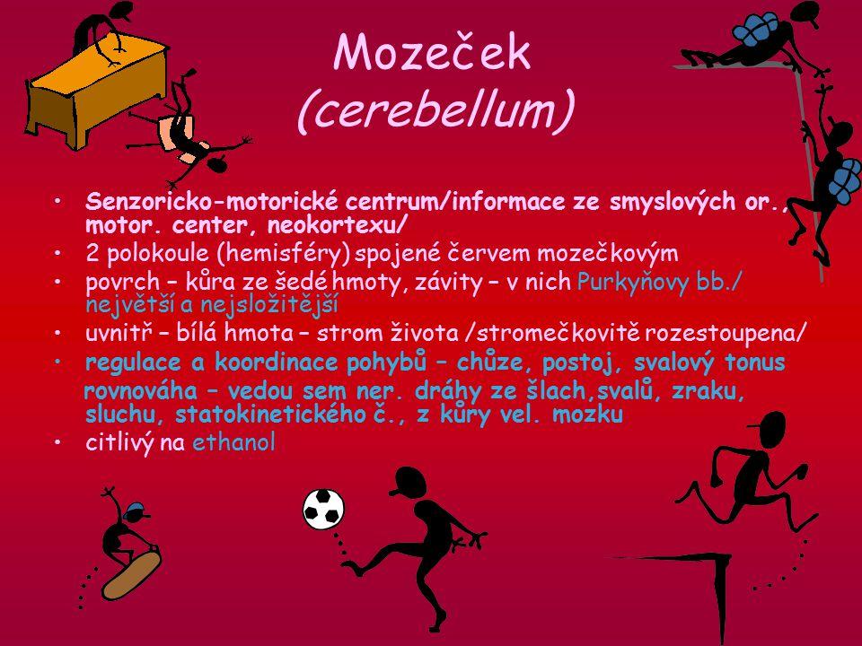 Mozeček (cerebellum) Senzoricko-motorické centrum/informace ze smyslových or., motor. center, neokortexu/
