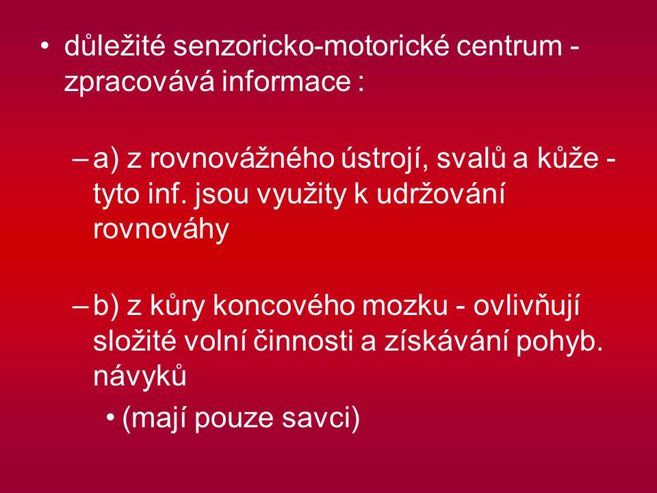 důležité senzoricko-motorické centrum - zpracovává informace :