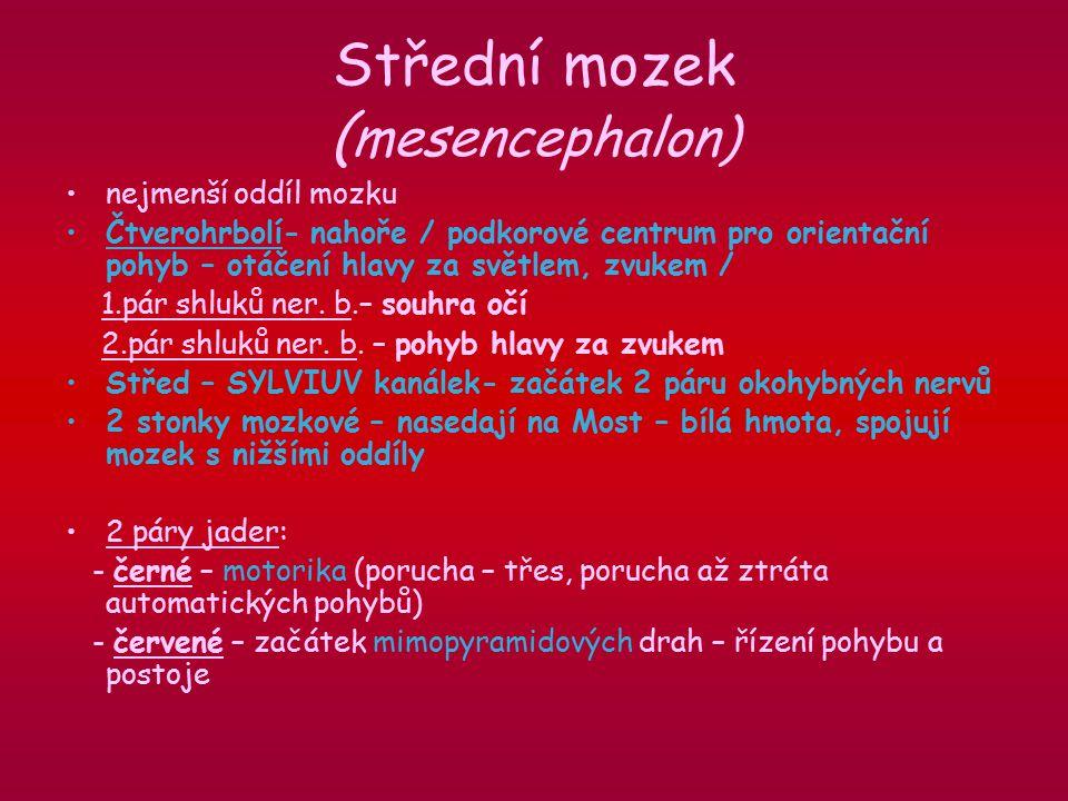 Střední mozek (mesencephalon)