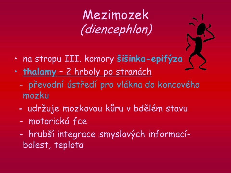 Mezimozek (diencephlon)