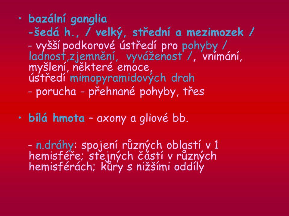 bazální ganglia -šedá h., / velký, střední a mezimozek /
