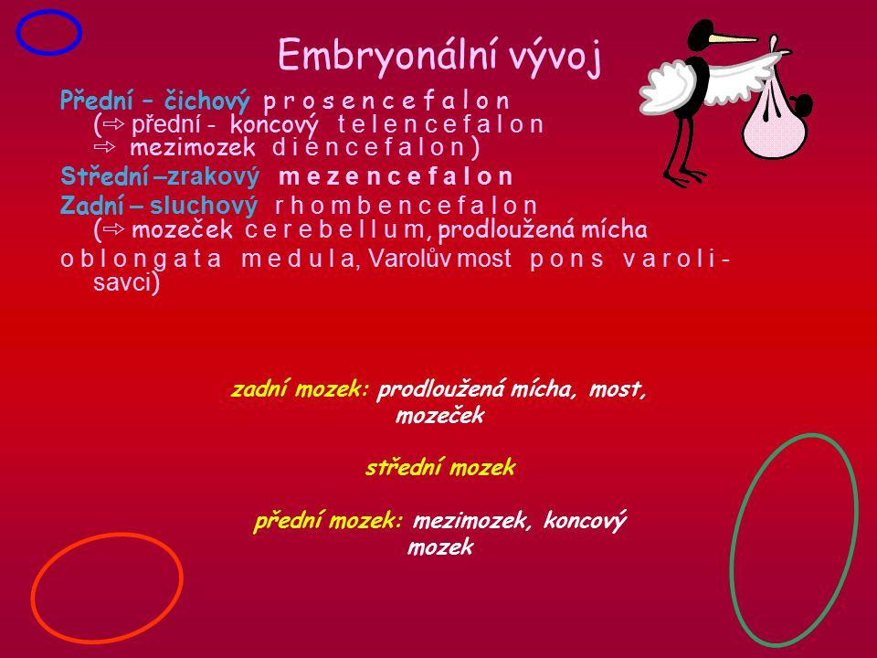 Embryonální vývoj