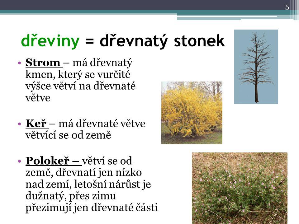 dřeviny = dřevnatý stonek