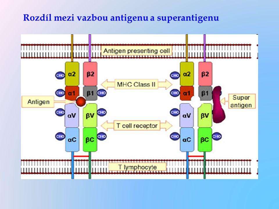 Rozdíl mezi vazbou antigenu a superantigenu