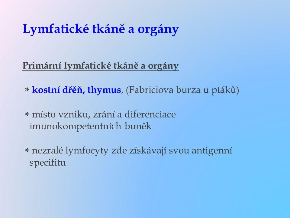 Lymfatické tkáně a orgány Primární lymfatické tkáně a orgány